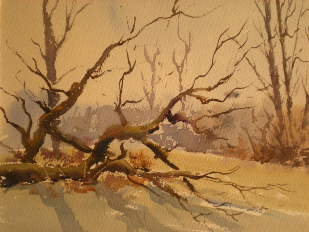 """Fallen tree"" original fine art by Graham Findlay"