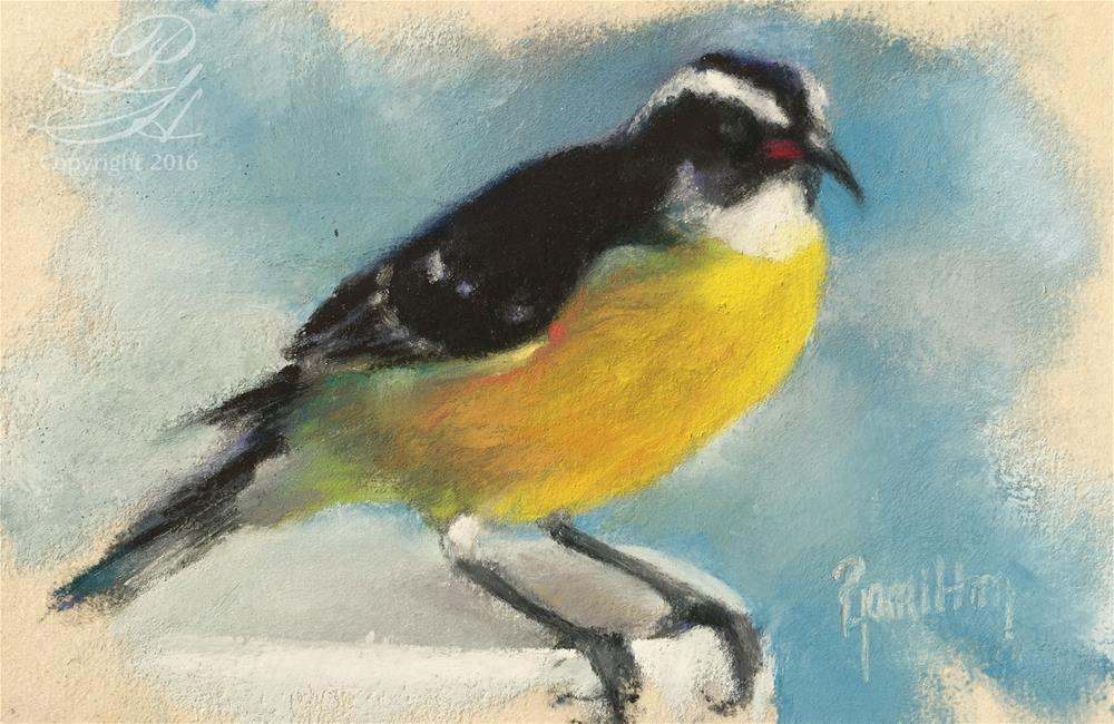 """Bananaquit"" original fine art by Pamela Hamilton"