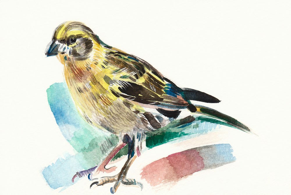 """Curious Serin"" original fine art by Anna  Fine Art"