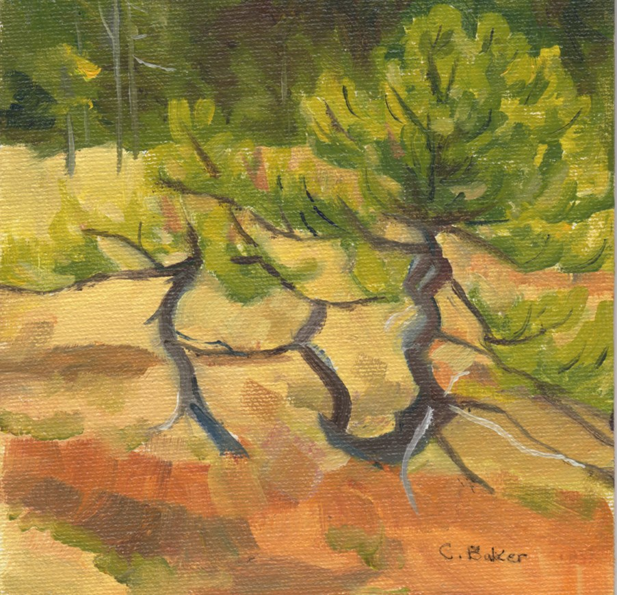 """Alpine Pine"" original fine art by Carole Baker"