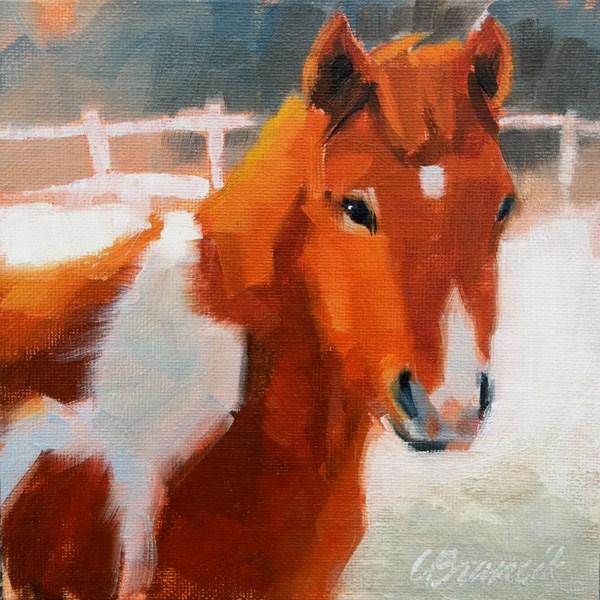 """Colt"" original fine art by Candace Brancik"