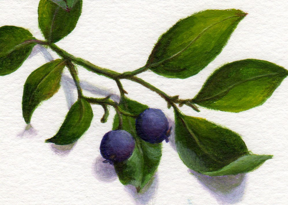 """Blueberry Season"" original fine art by Debbie Shirley"