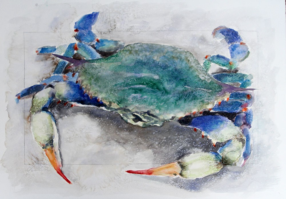 """Coastal Crab Watercolor"" original fine art by Clair Hartmann"