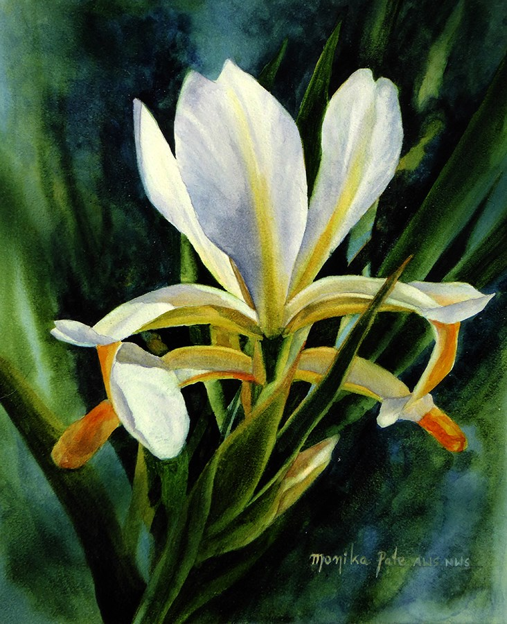 """Siberian Iris"" original fine art by Monika Pate"