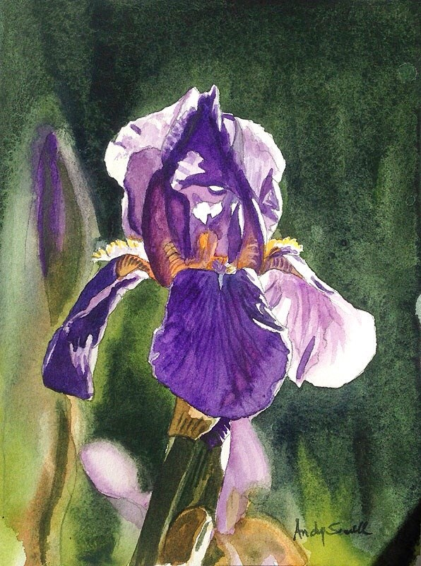 """Verns iris"" original fine art by Andy Sewell"