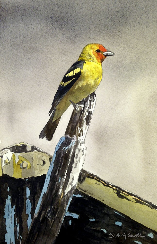 """Western Tanager"" original fine art by Andy Sewell"