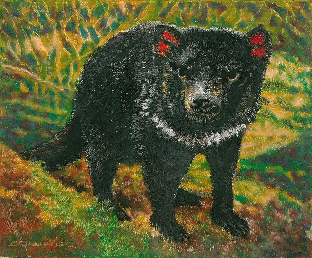 """286 TASMANIAN DEVIL"" original fine art by Trevor Downes"