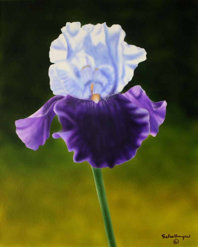 """Purple Passion"" original fine art by Fred Schollmeyer"