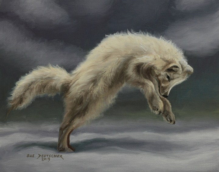 """""""Arctic Fox"""" original fine art by Sue Deutscher"""