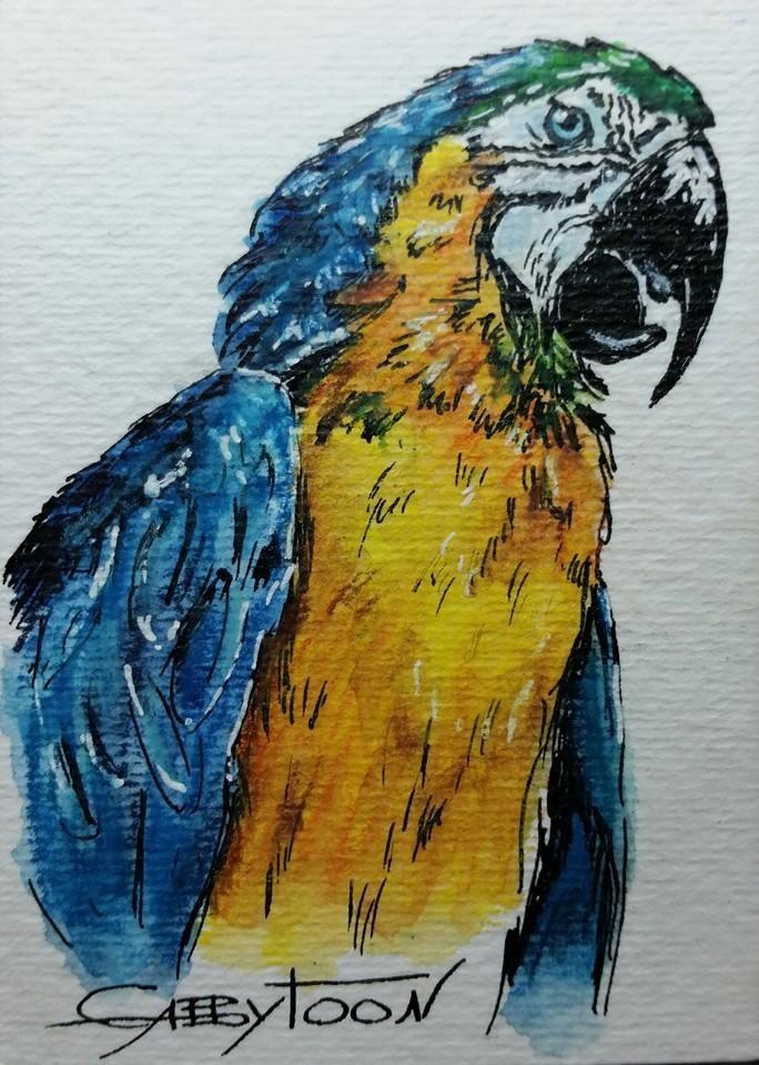 """Parrot(ACEO)"" original fine art by Gabriella DeLamater"