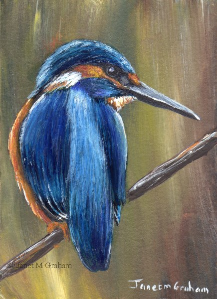 """Kingfisher ACEO"" original fine art by Janet Graham"