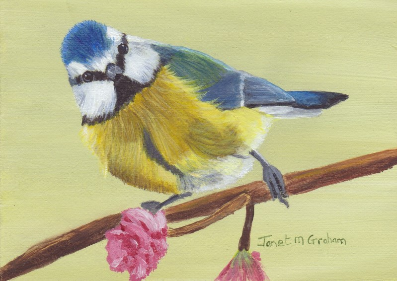 """Blue Tit 2 ACEO"" original fine art by Janet Graham"