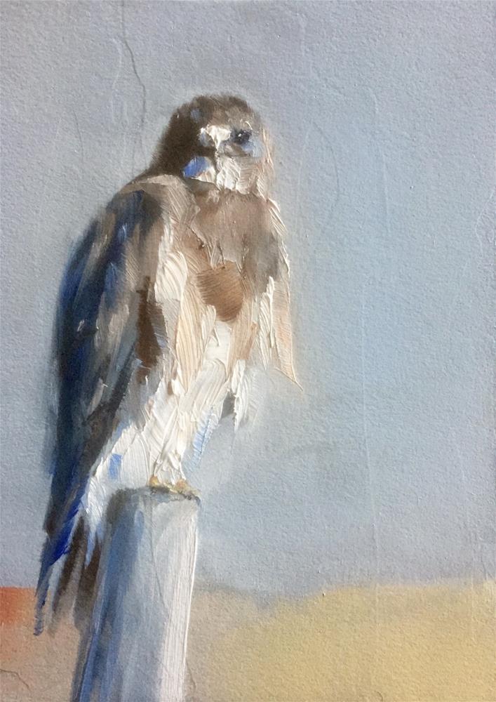 """""""Eyes Like a Hawk"""" original fine art by Gary Bruton"""