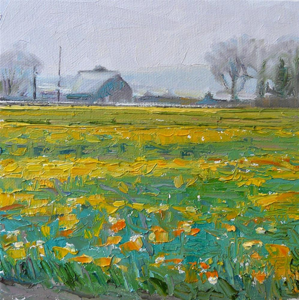 """Fields of Daffodils,landscape,oil on canvas,8x8,price$250"" original fine art by Joy Olney"