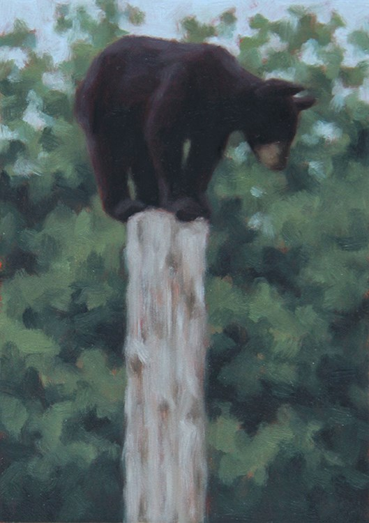 """Black Bear Cub"" original fine art by Sarah Becktel"