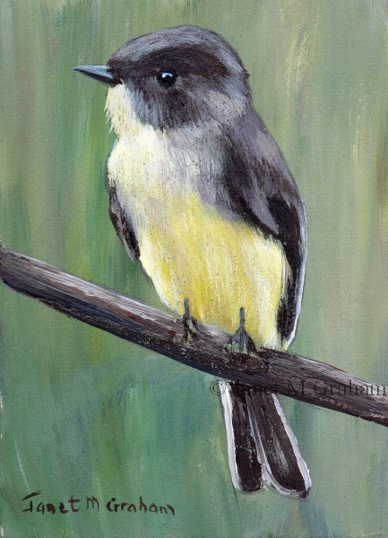 """Eastern Phoebe ACEO"" original fine art by Janet Graham"