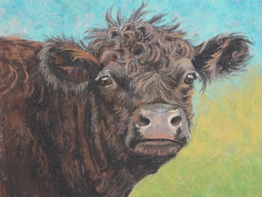 """""""Curley #1"""" original fine art by Denise Beard"""