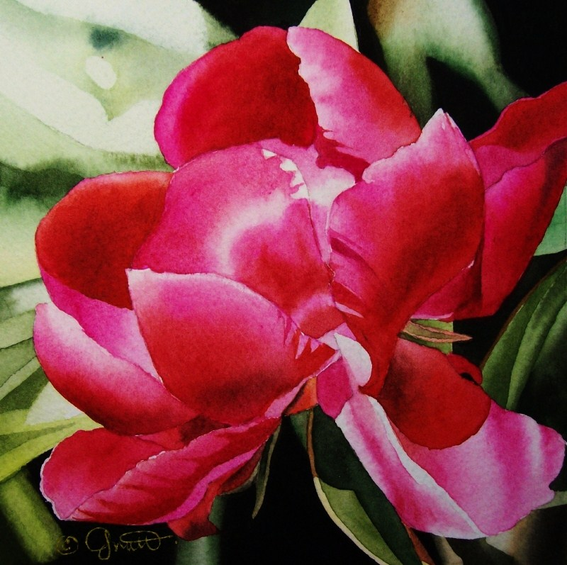 """Hot Pink Peony"" original fine art by Jacqueline Gnott, TWSA, WHS"