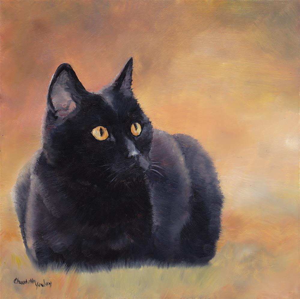 """Black Cat"" original fine art by Charlotte Yealey"