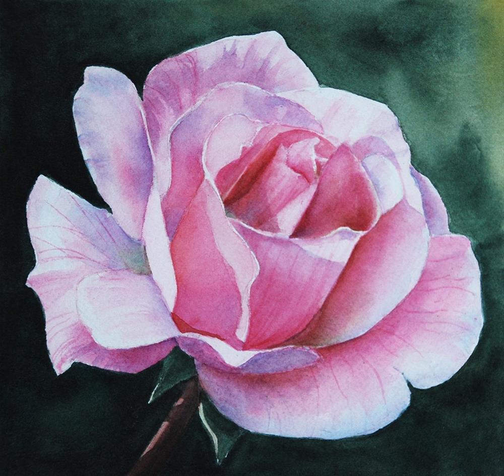 """""""Pink Rose"""" original fine art by Mary Anderson"""