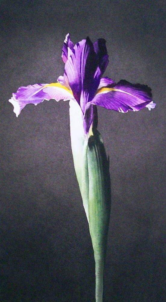 """Dutch Iris"" original fine art by Jacqueline Gnott, whs"