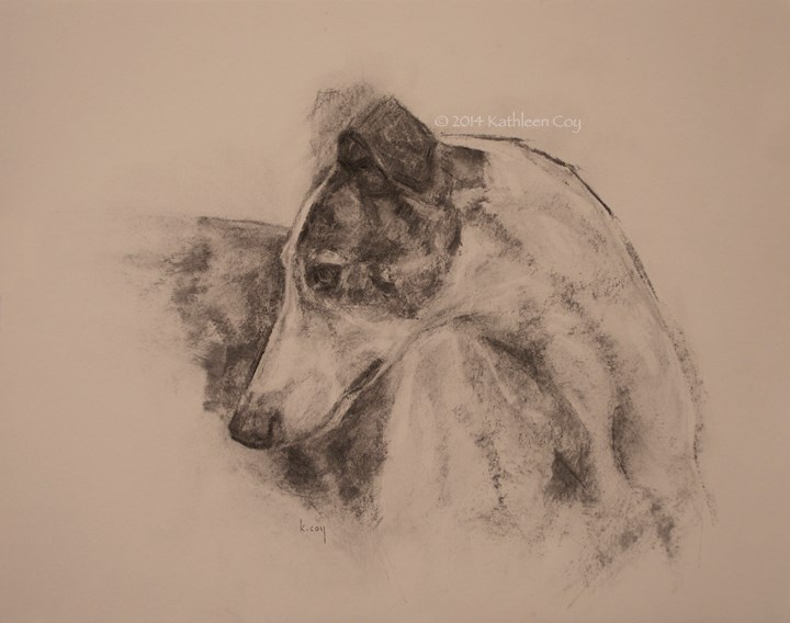 """Greyhound in Charcoal"" original fine art by Kathleen Coy"