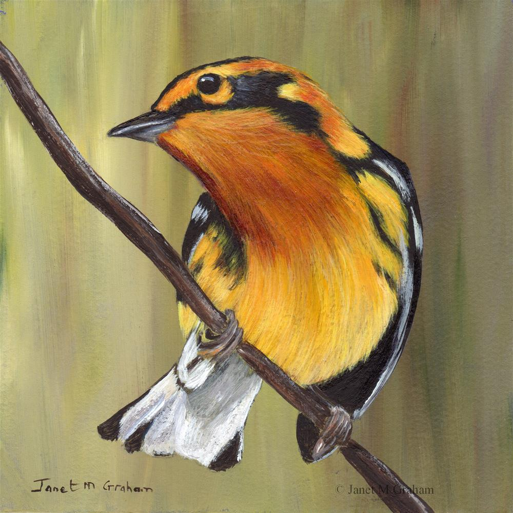 """Blackburnian Warbler"" original fine art by Janet Graham"