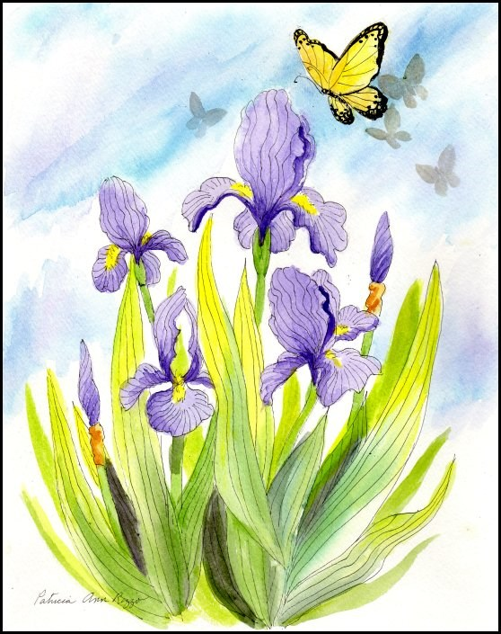 """Lavender Iris with Butterflies"" original fine art by Patricia Ann Rizzo"