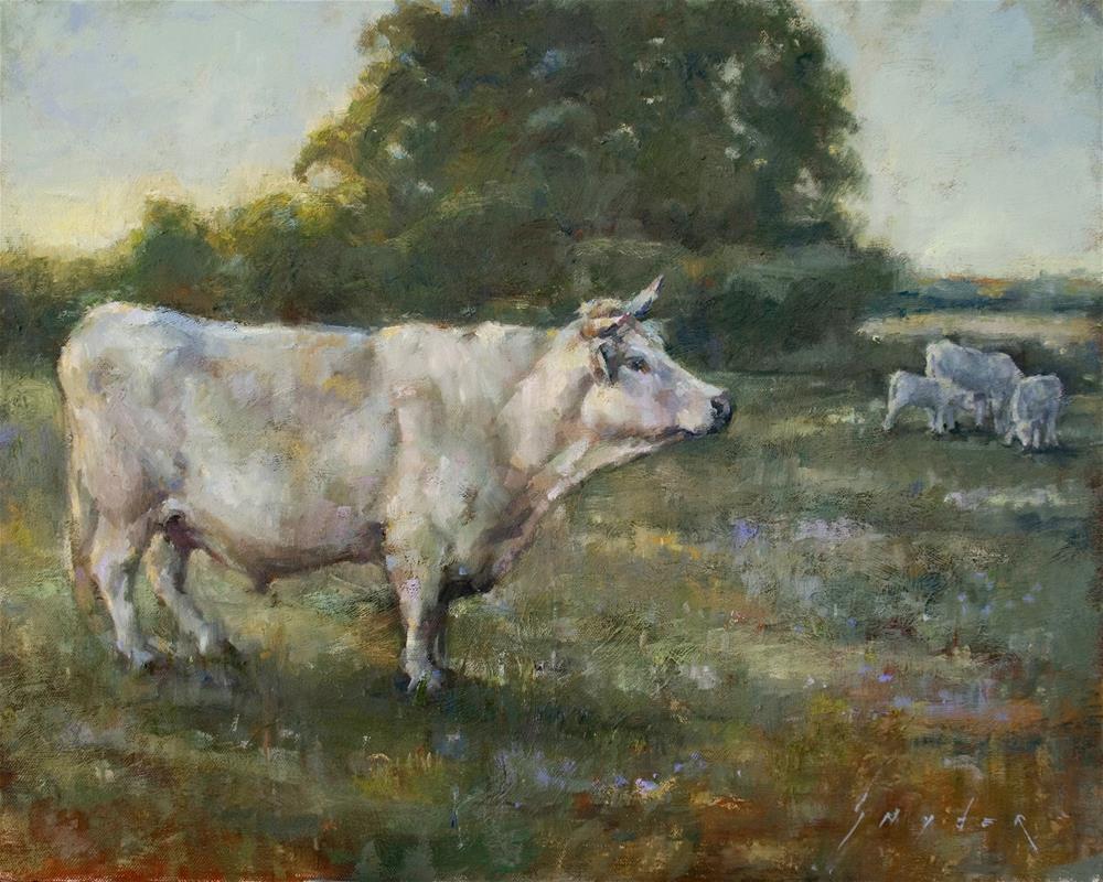 """""""Evening Walk Home - Charolais"""" original fine art by Julie Snyder"""