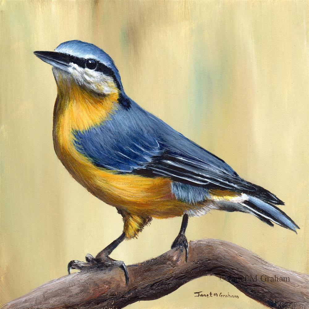 """Nuthatch"" original fine art by Janet Graham"