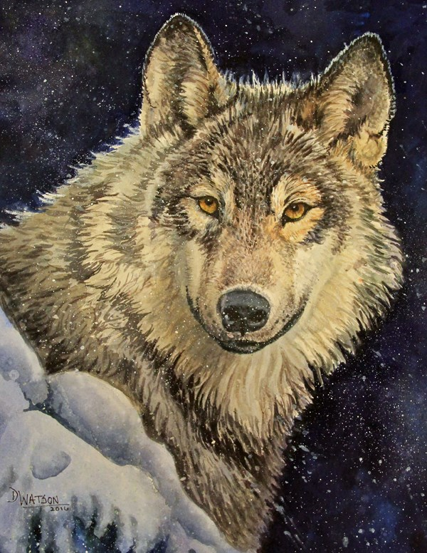 """Winter Wolf"" original fine art by Deb Watson"