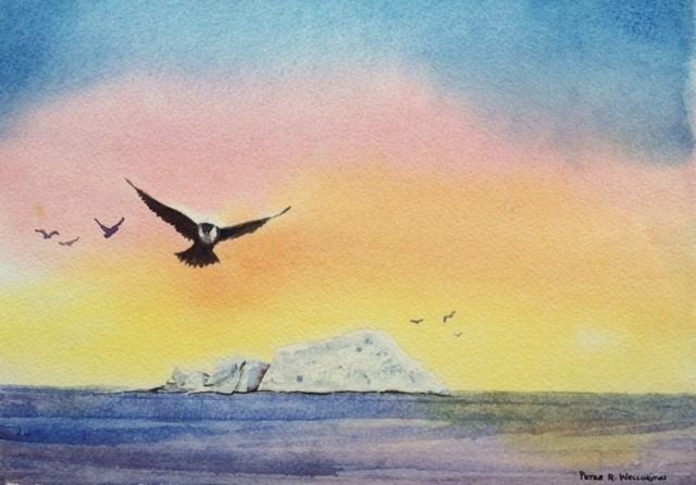 """Flight of the Arctic Turn"" original fine art by Peter Wellington"