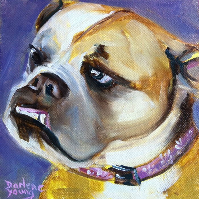 """Shy Bull Dog, oil on canvas board, 6x6"" original fine art by Darlene Young"