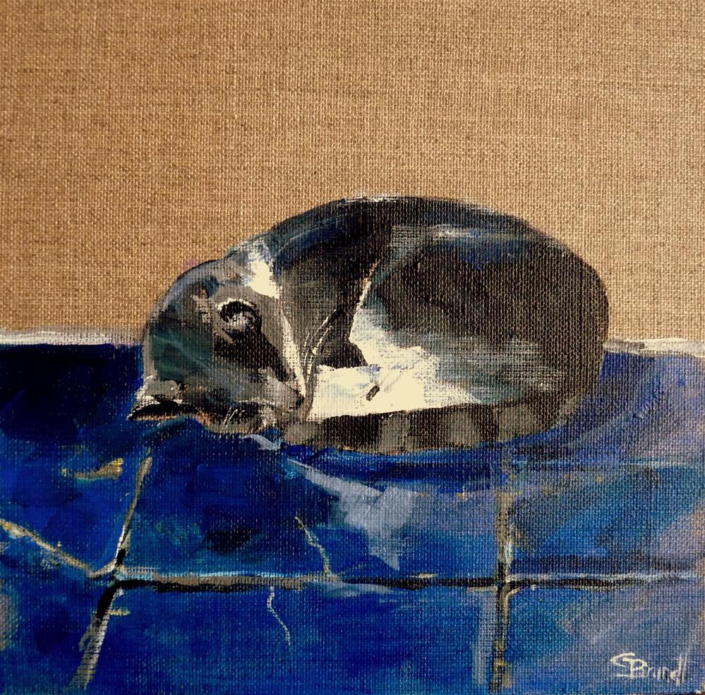 """cat on blue"" original fine art by Claudia Brandt"