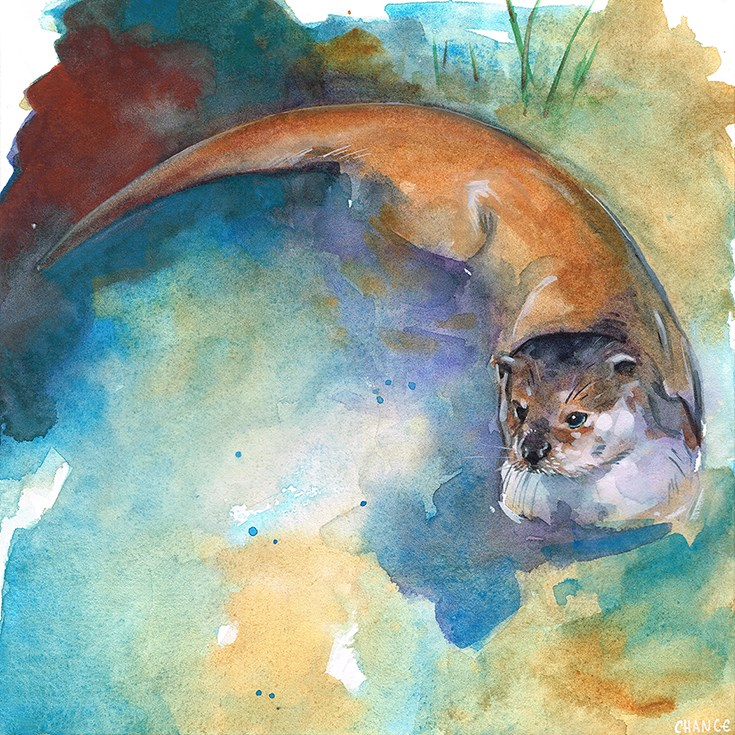 """Otter"" original fine art by Annabel Chance"