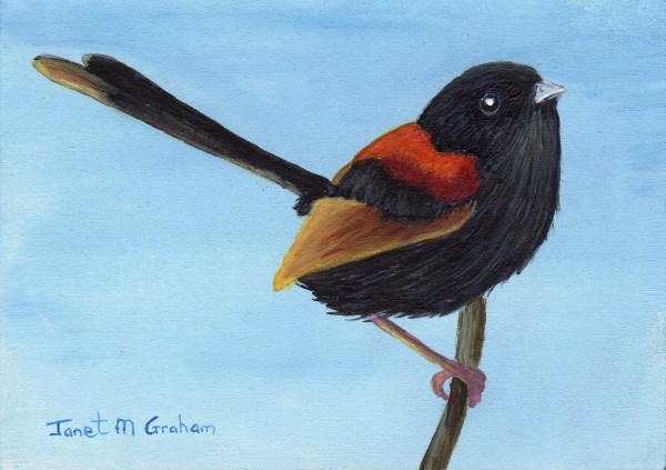 """Red Backed Fairy Wren ACEO"" original fine art by Janet Graham"
