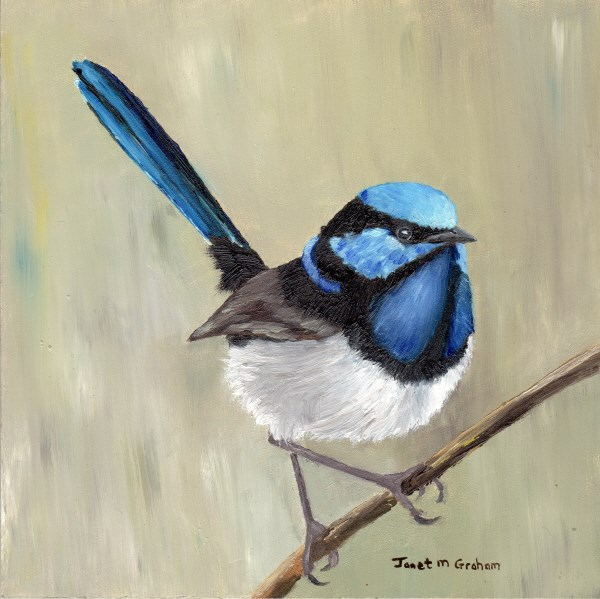"""Superb Fairy Wren"" original fine art by Janet Graham"