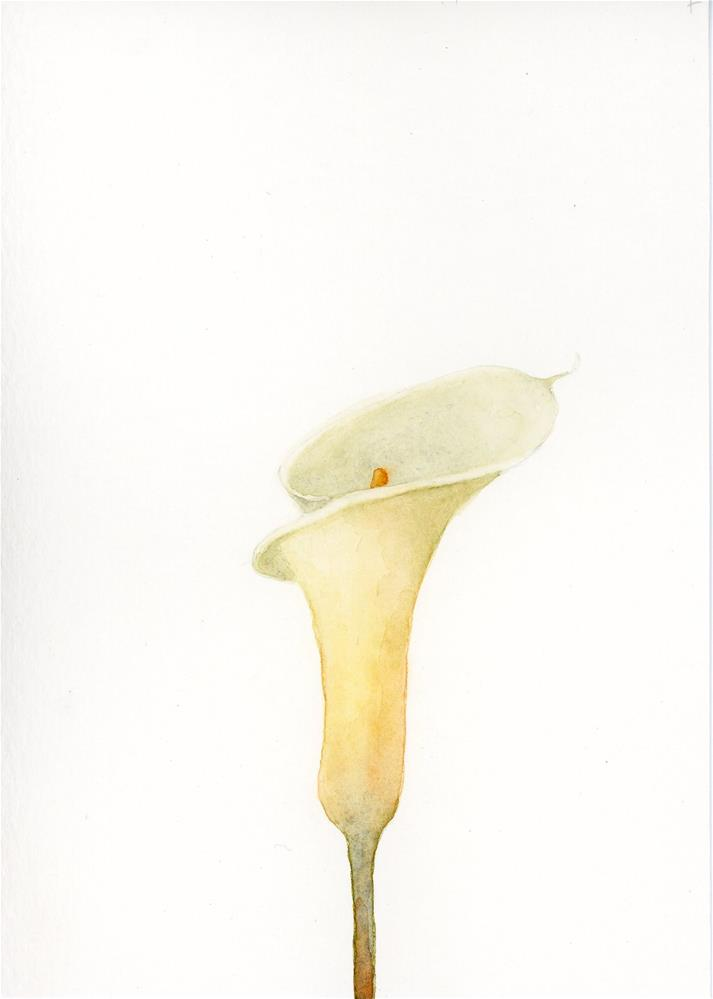 """Calla Lily Study II"" original fine art by Susanne Billings"