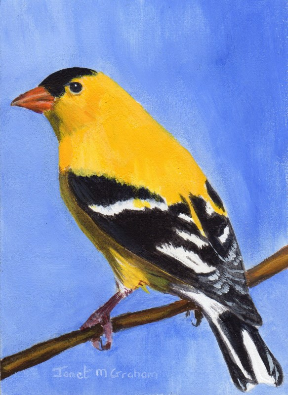 """Goldfinch ACEO"" original fine art by Janet Graham"