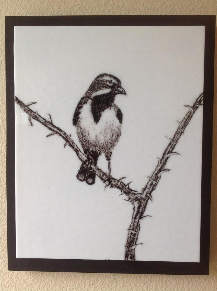 """Black Throated Sparrow"" original fine art by Calloway Meiners"