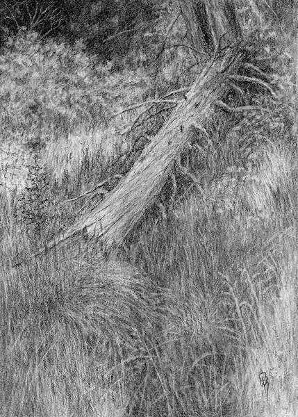 """Nature Study No 2"" original fine art by David King"