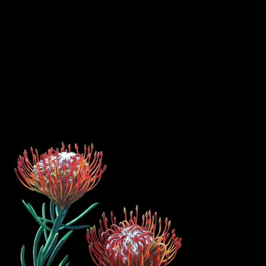 """Protea I"" original fine art by Jelaine Faunce"