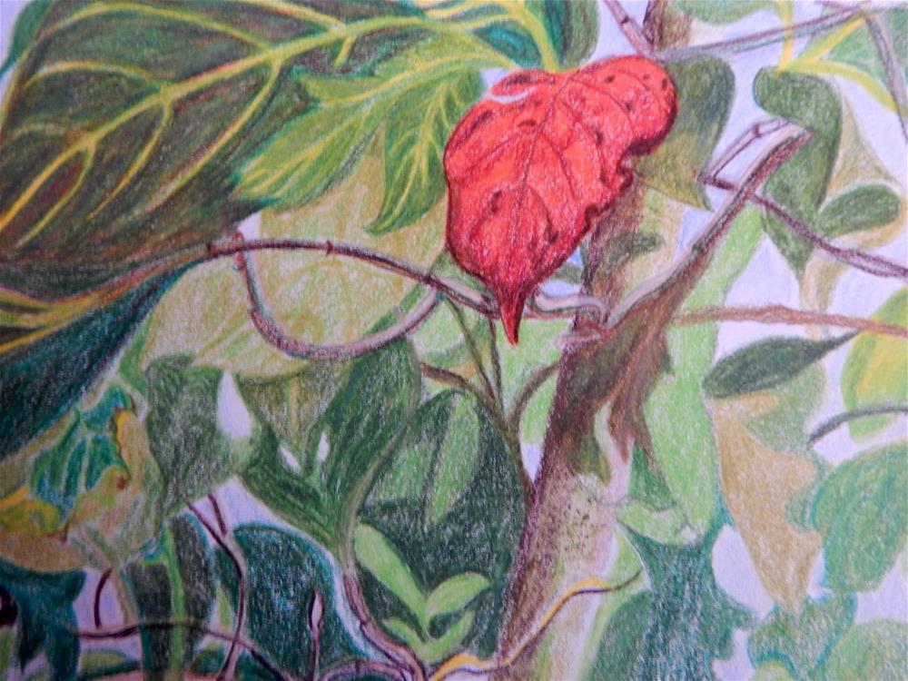 """""""First Red"""" original fine art by Elaine Shortall"""