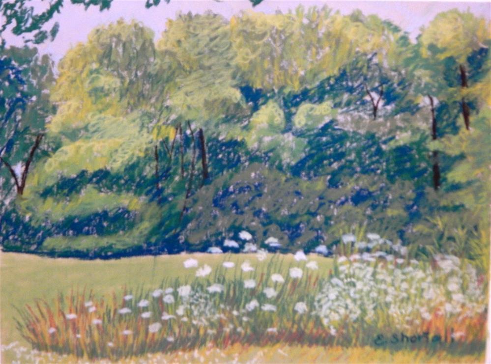 """Queen Anne's Lace"" original fine art by Elaine Shortall"