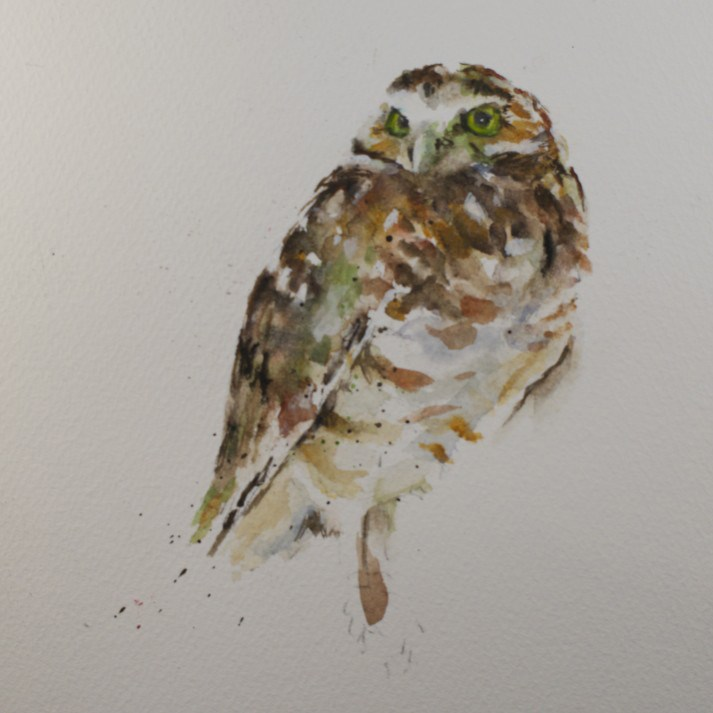 """Little Owl"" original fine art by Sue Churchgrant"