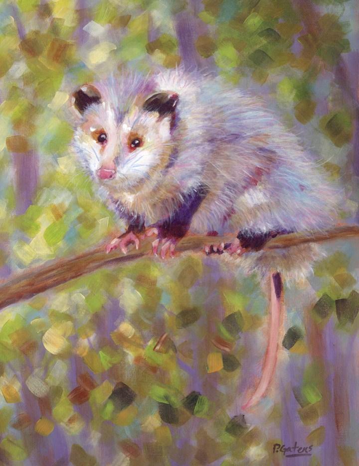 Oh! Possum original fine art by Pamela Gatens