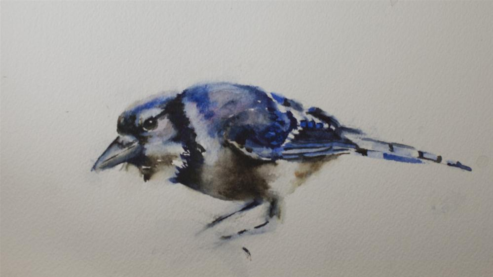 """Bluejay Study"" original fine art by Sue Churchgrant"