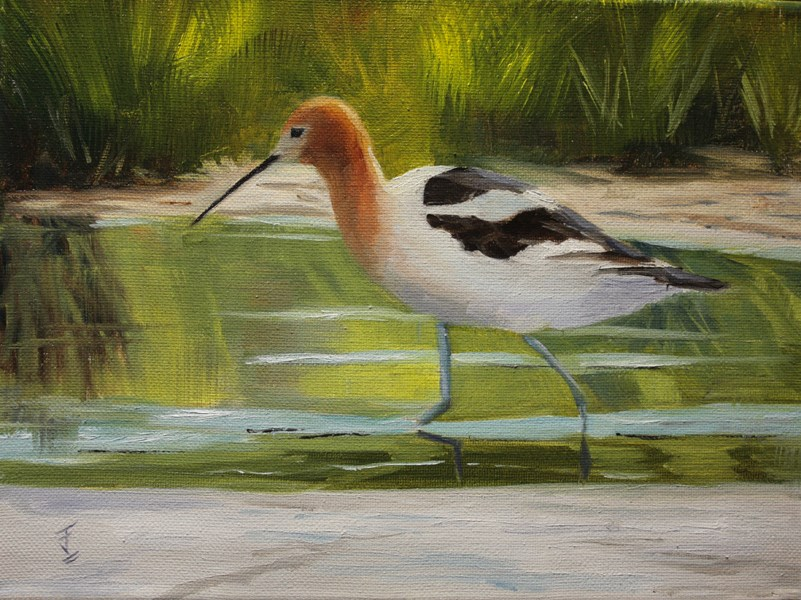 """Avocet"" original fine art by Jane Frederick"