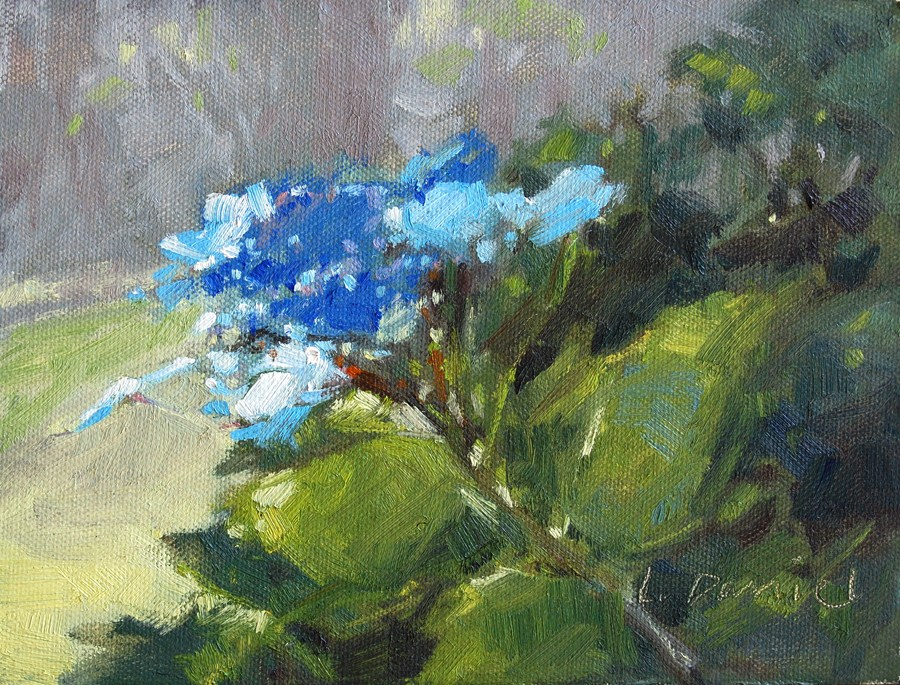 """Lacecap Hydrangea Blossom"" original fine art by Laurel Daniel"