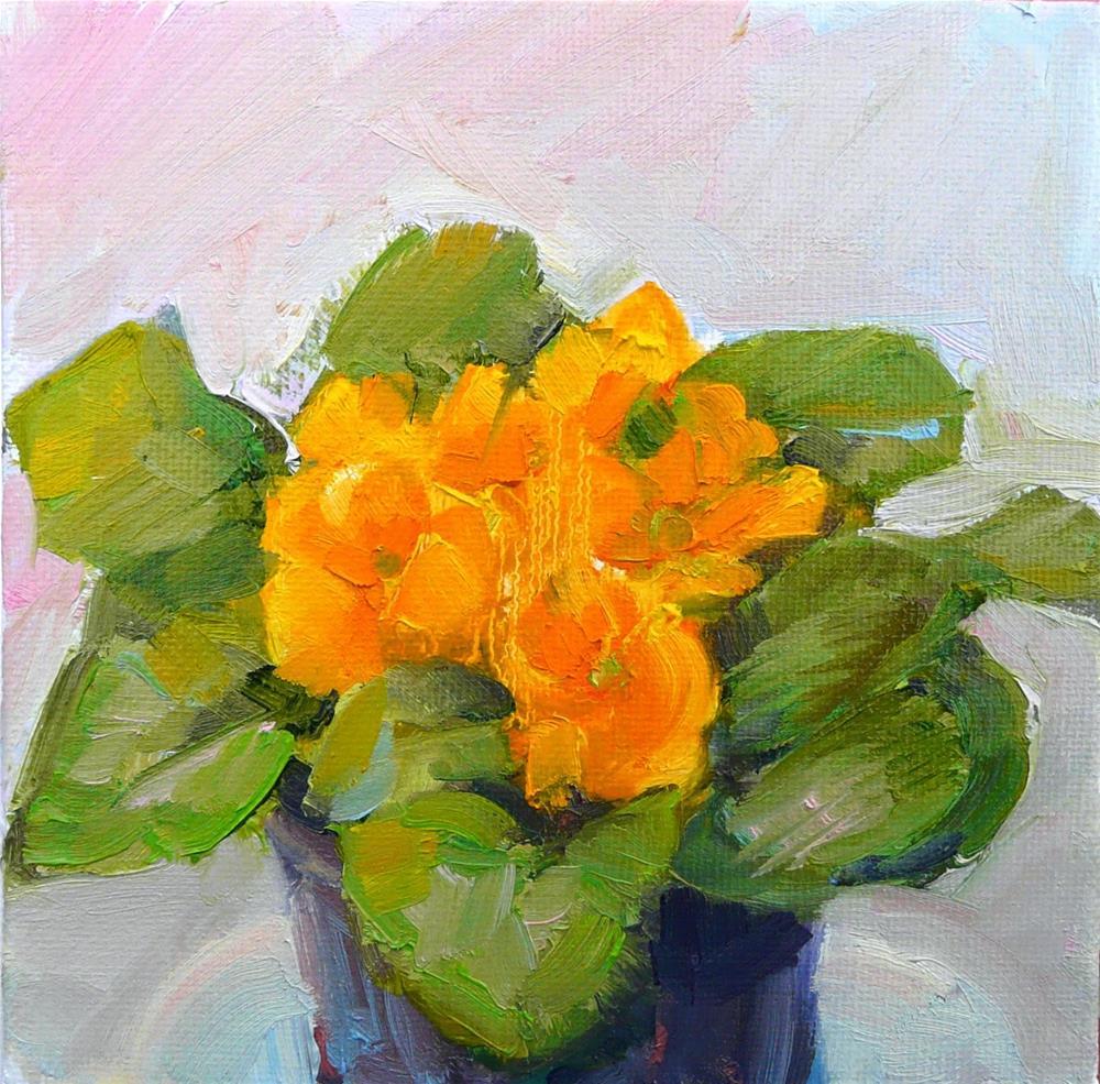 """First Orange Primrose,still life,oil on canvas,6x6,price$200"" original fine art by Joy Olney"